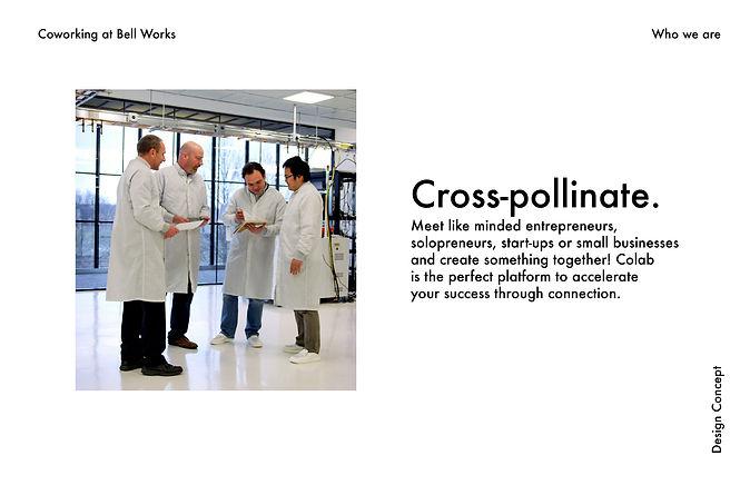 Colab Branding Presentation-03.jpg