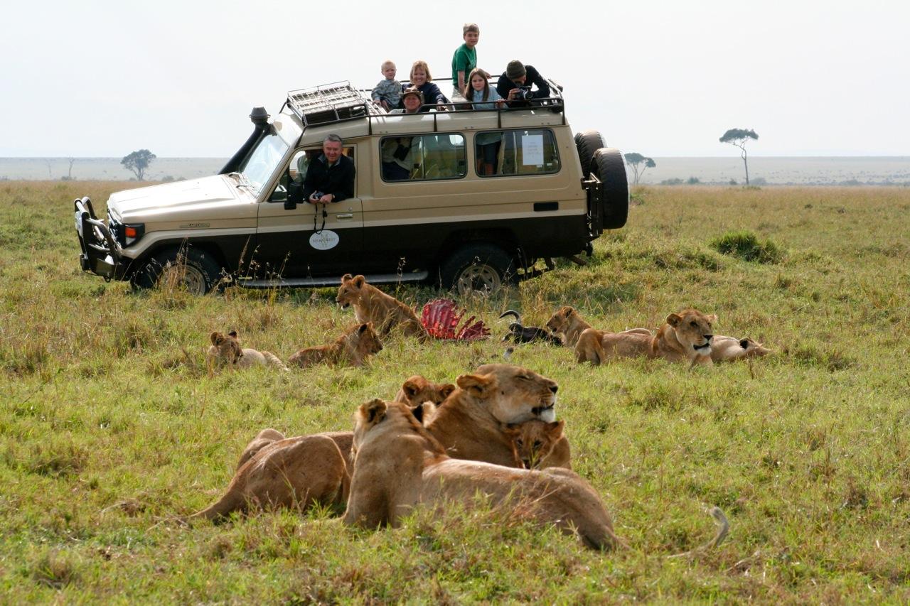 The Krook Safari