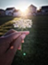 Summer Sunshine  JM.jpg