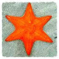 estrella de 6_edited