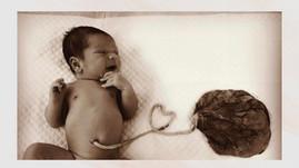 Lotus Birth