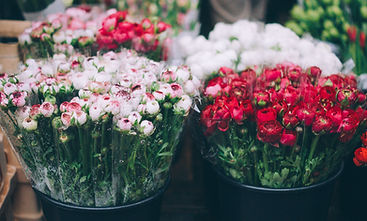 Fresh Flowers - alternating red and white in color