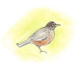 Cheerful Robin