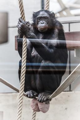 bonobo, 2015