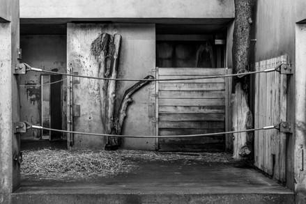 elephant house, 2015