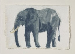 Holly Frean, Elephant II