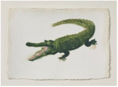 Holly Frean, Crocodile