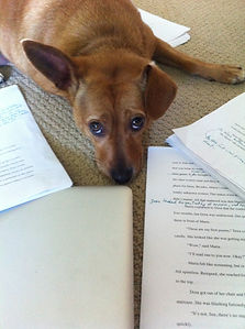 a dog, a MacBook Air, a manuscript