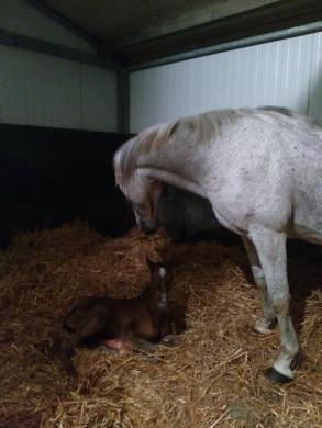 Quelques minutes après sa naissance