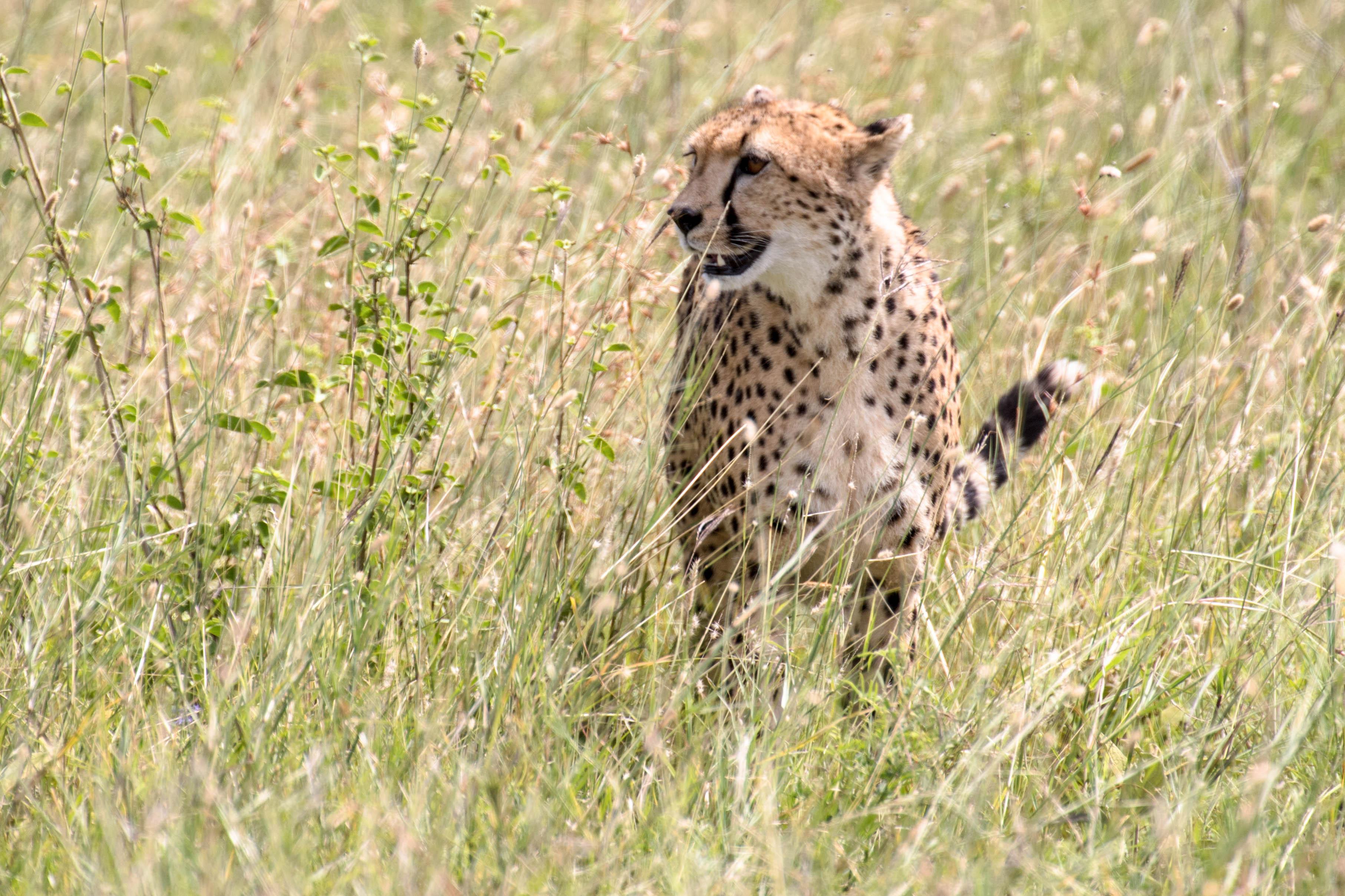 Schutz im hohen Gras