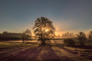 Wurst_Gabriele_Herbstmorgen.jpg