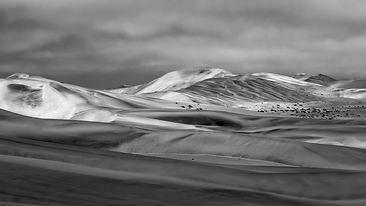 Morgens_in_der_Weißen_Namib.jpg