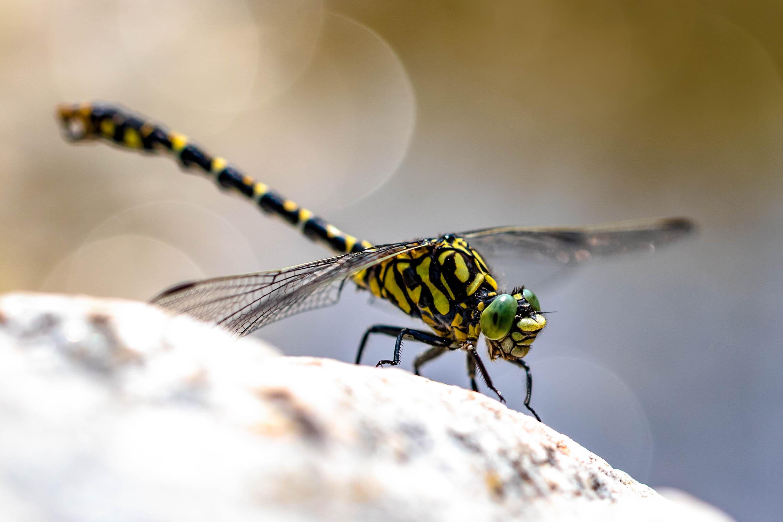 Libelle im Licht