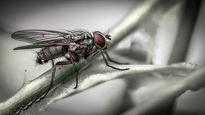 Wurst_Gabriele_Nur-eine-Fliege.jpg