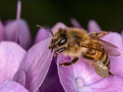 Silberne Pollen