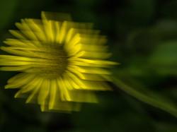 Gelbe_Blüte
