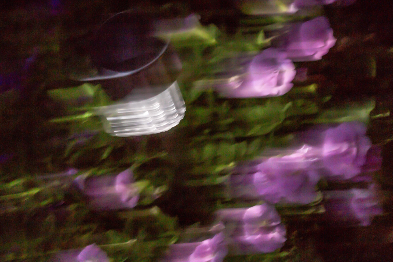 Abends im Blumentopf