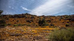 Wenn die Wüste blüht