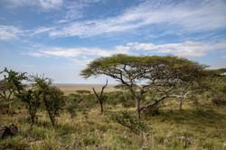 Weite der Serengeti