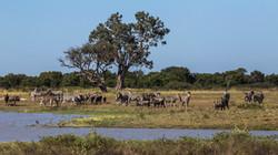 Im Hwange Nationalpark in Simbabwe