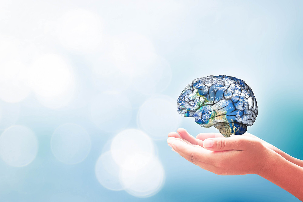 ידיים מחזיקות מח אנושי רגש ומחקר