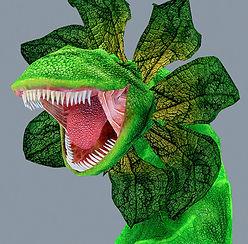 plant 55.jpg