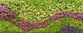 Green Walls Reduce Heat Gain around the Home & Garden, Green Spaces, Reduce Air-Conditioning
