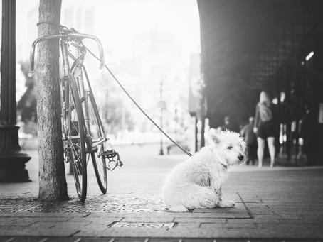Dog Parking - Is Your Dog Safe?