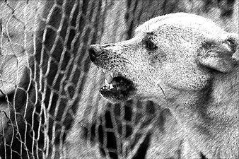 dog-486553_1280_FotoSketcher_edited.jpg