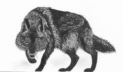 Akai, der Timberwolf