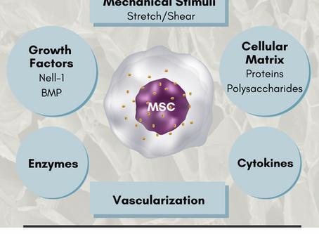 Mesenchymal Stem Cell Microenvironment