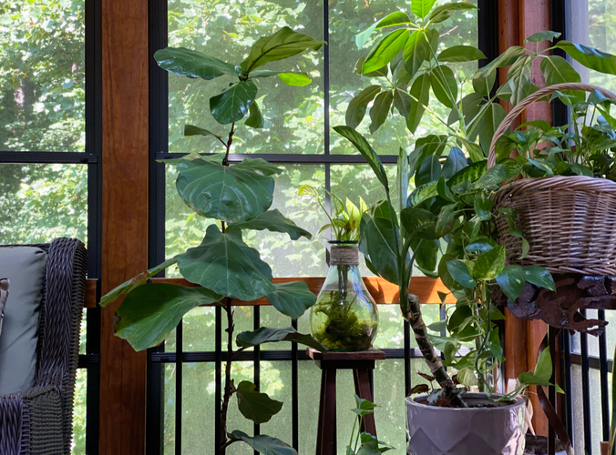 Sunroom Plants