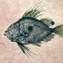 John Dory - Gyotaku prints
