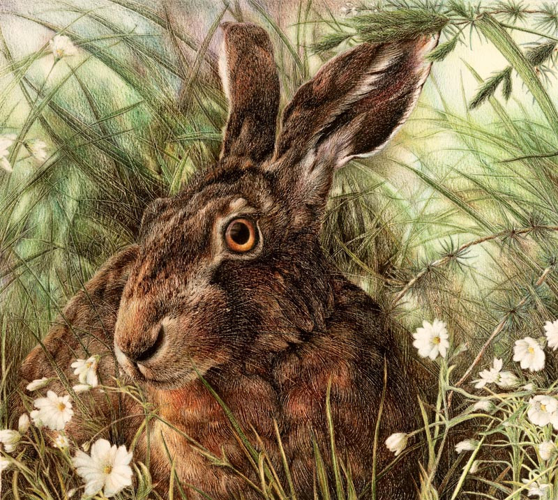 Brown Hare by Nick Day