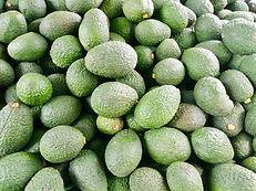 Hass Avocado.jpg