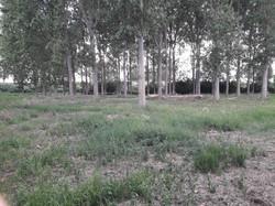 DogBehavior Landscape