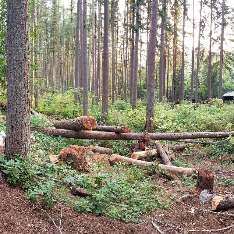 Douglas Richardson: For bears, size does matter