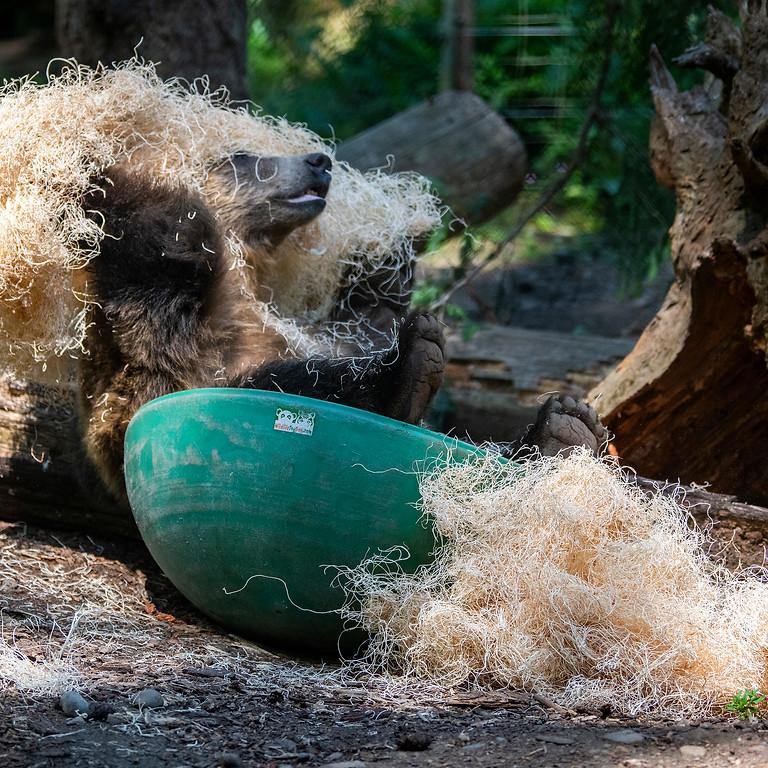 Kyle Banton-Jones: A Wild Approach to Bear Enrichment