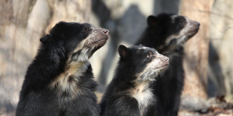 Bear Care Group-Board meeting