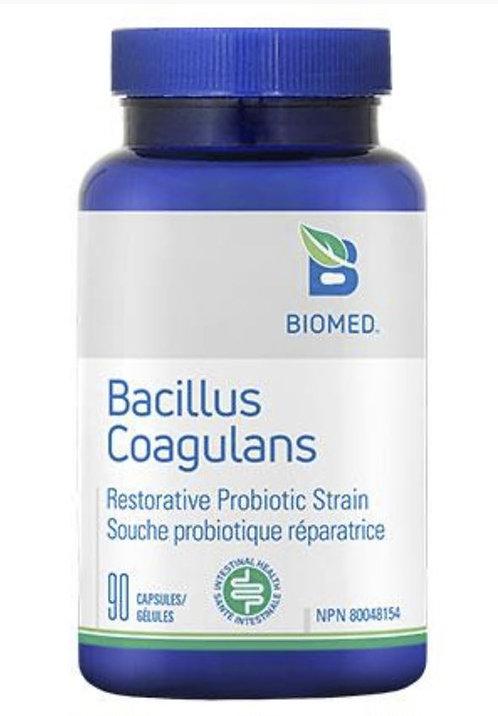 BACILLUS COAGULANS