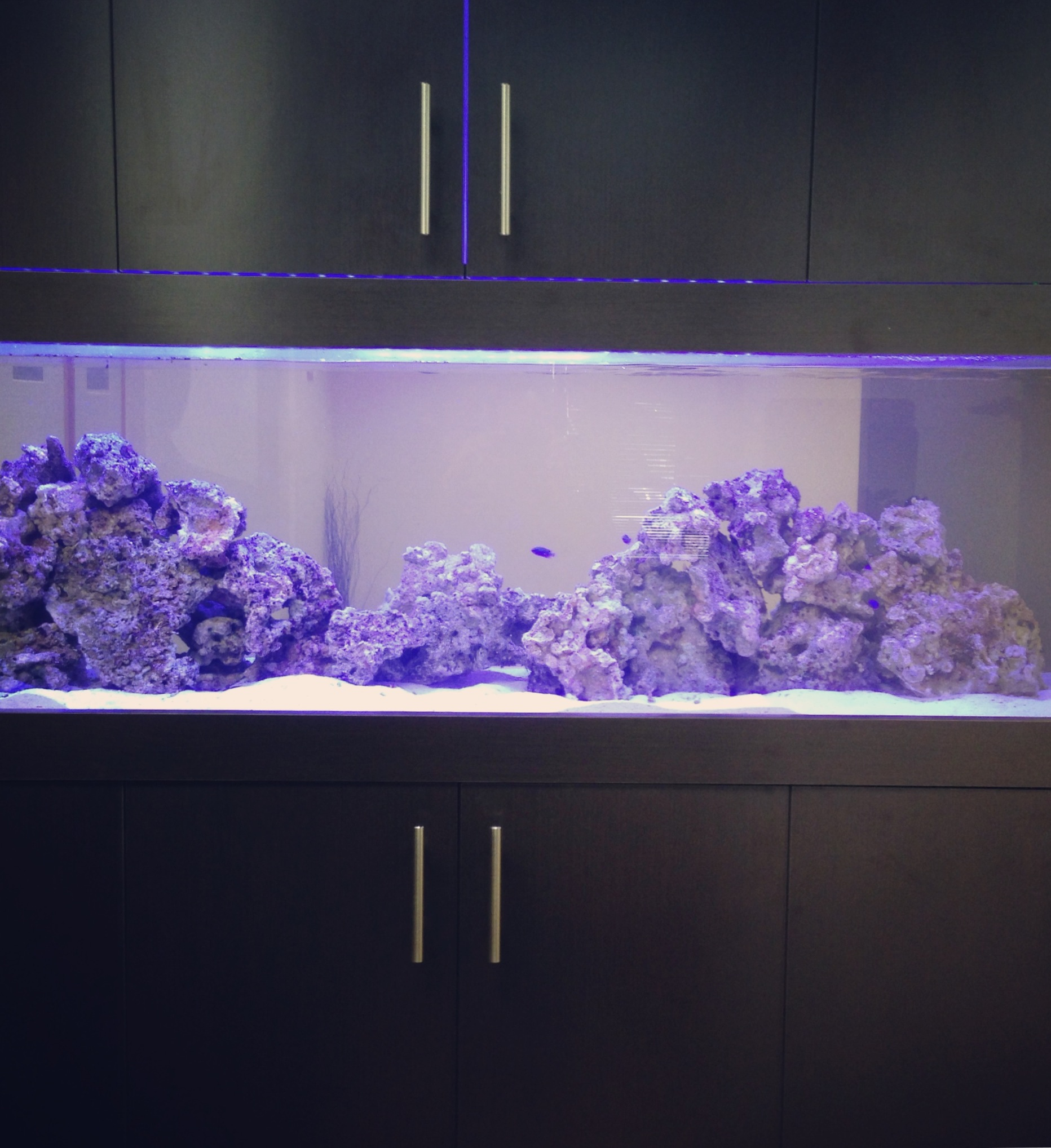 Aquarium/Cabinetry design & Install