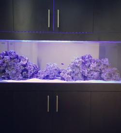 Aquarium/Cabinetry design & Install