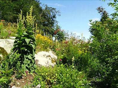 Garten 7.jpg