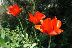 ソレイユの花壇より