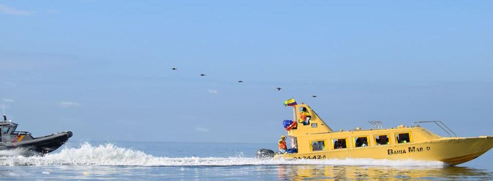 avistamiento de ballenas oceano pacifico
