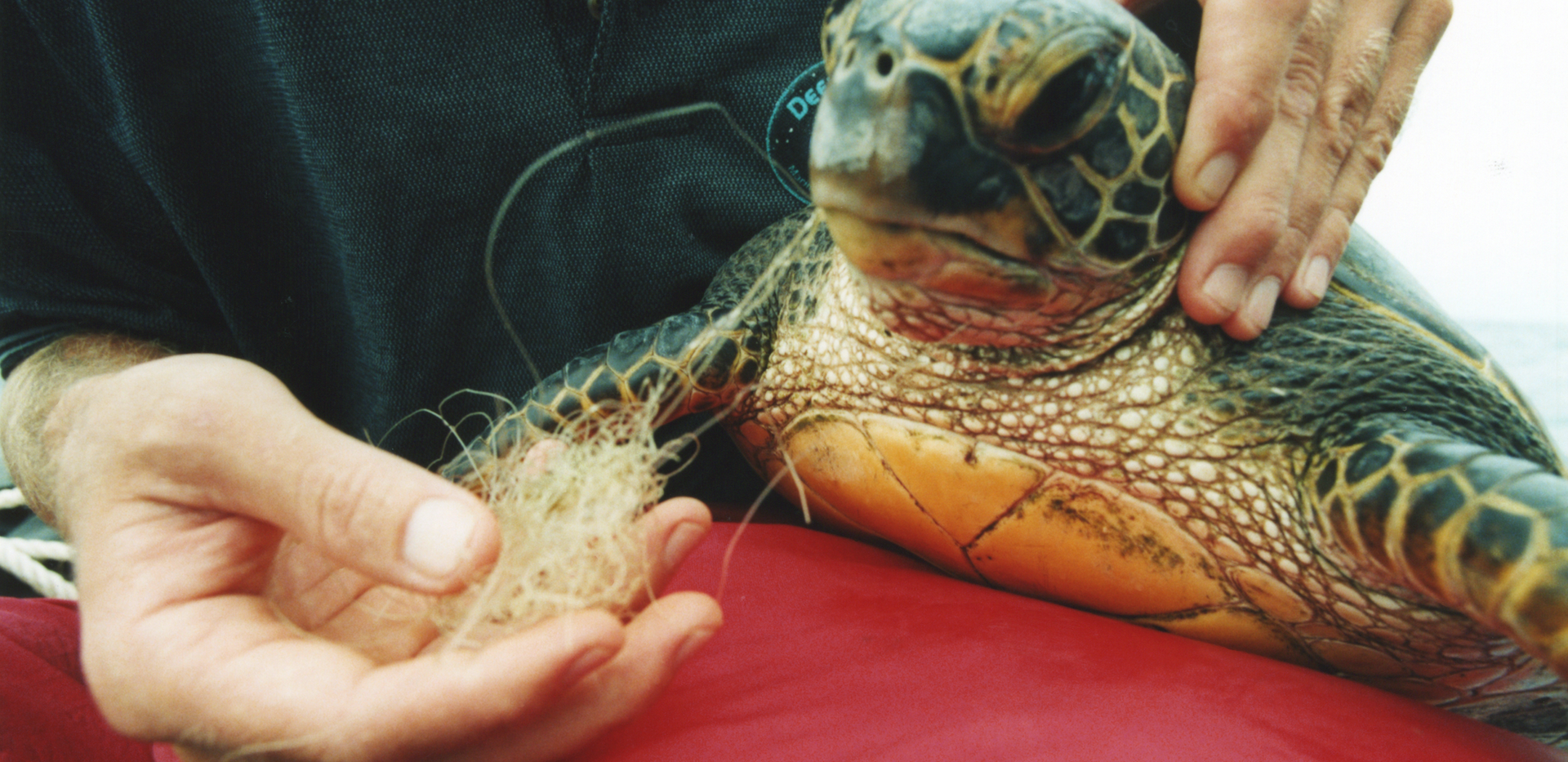 Ken rescuing Turtles in Hawaii