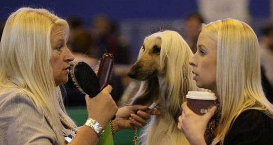 funny-same-hair-women-dog-greyhound (2).