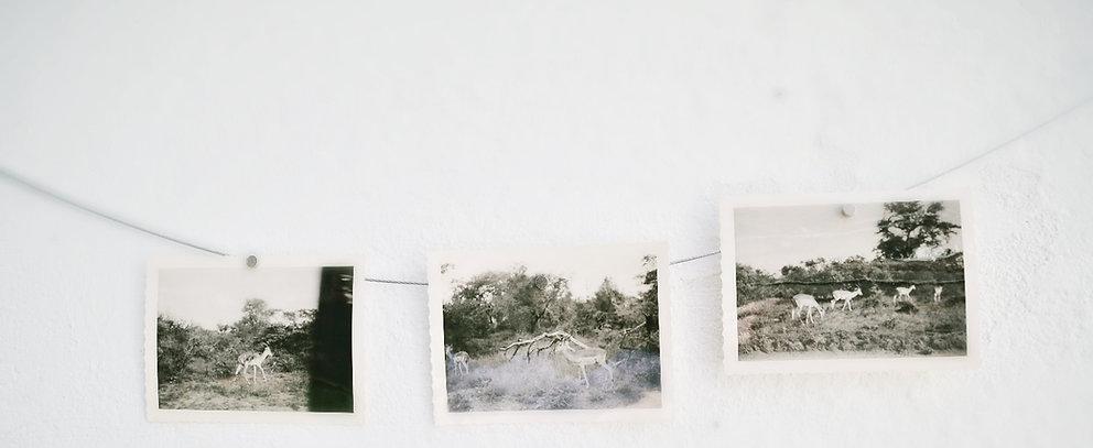fotografie, album,safari, found footage, acief, hetprentenkainet