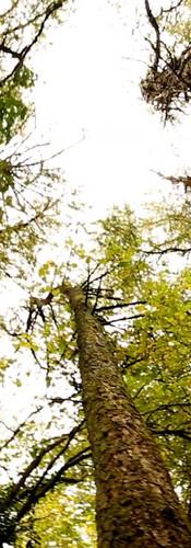 Enjoy our beautiful woodland walk.