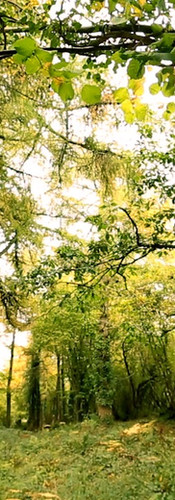Take a stroll through our beautiful Woodland Walk